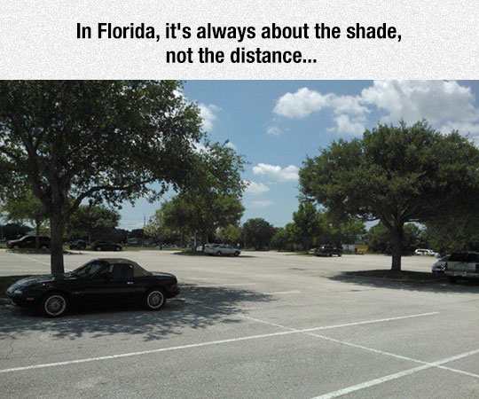 funny-parking-lot-tree-shadow-cars