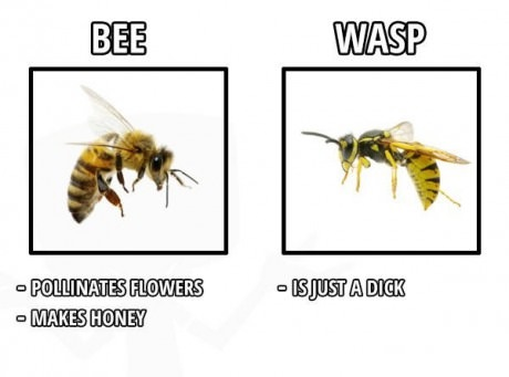 bee-vs-wasp