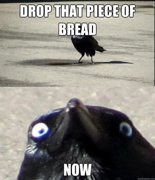 bird-crow-bread-creepy