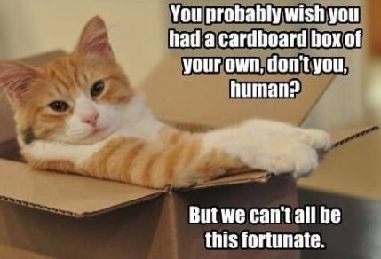 cat-box-fortune