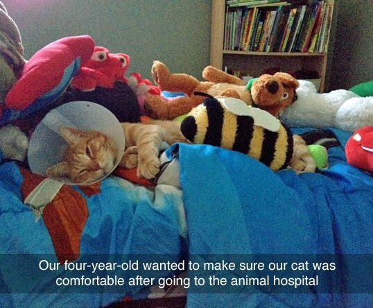 cat-kid-animal-hospital