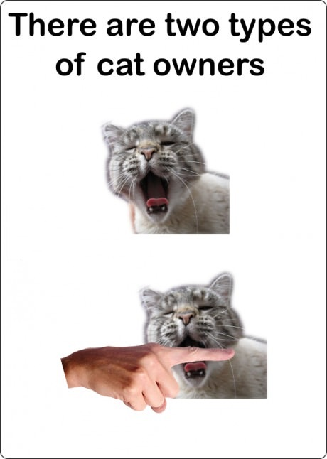 cat-owners-type