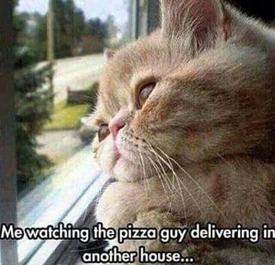 cat-pizza-delivery-food