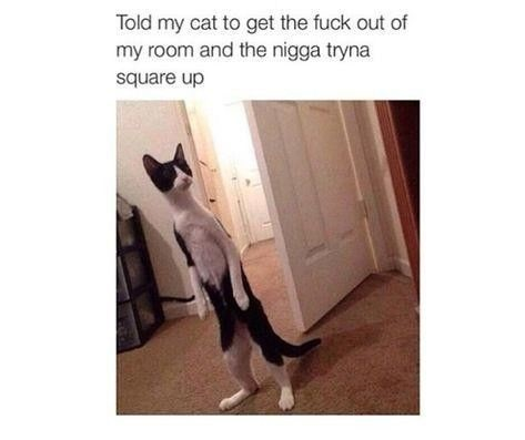 cat-standing-fight