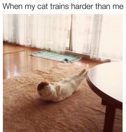 cat-work-out-harder