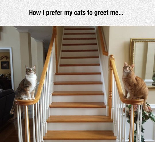 cats-greeting-stairs-fabulous