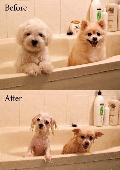 dogs-bath-before-after