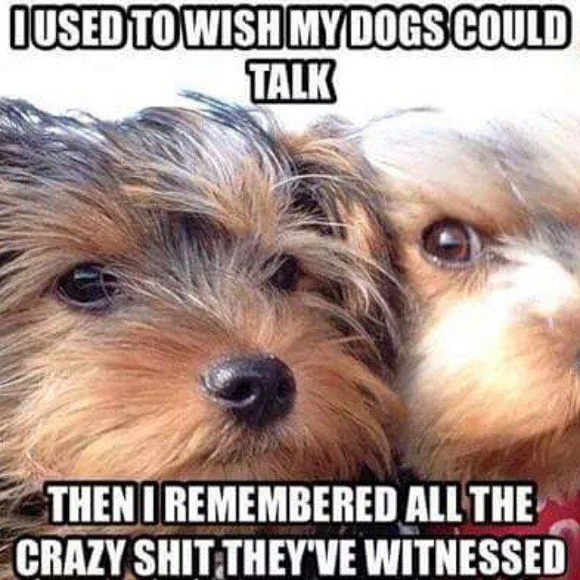 dogs-talk-witnesses-crazy