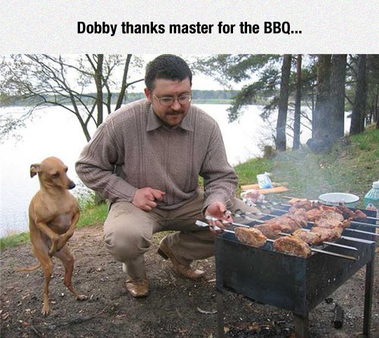 funny-Dobby-dog-barbecue-lake