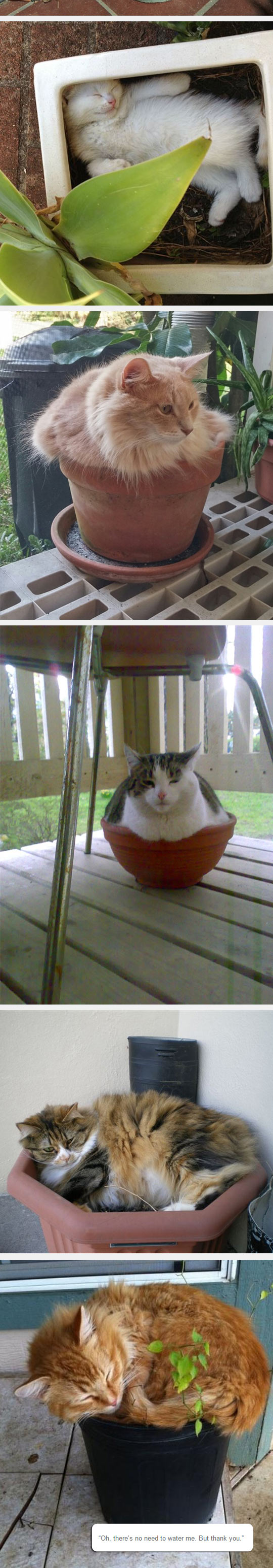 funny-cat-pot-plant-sitting-back-yard