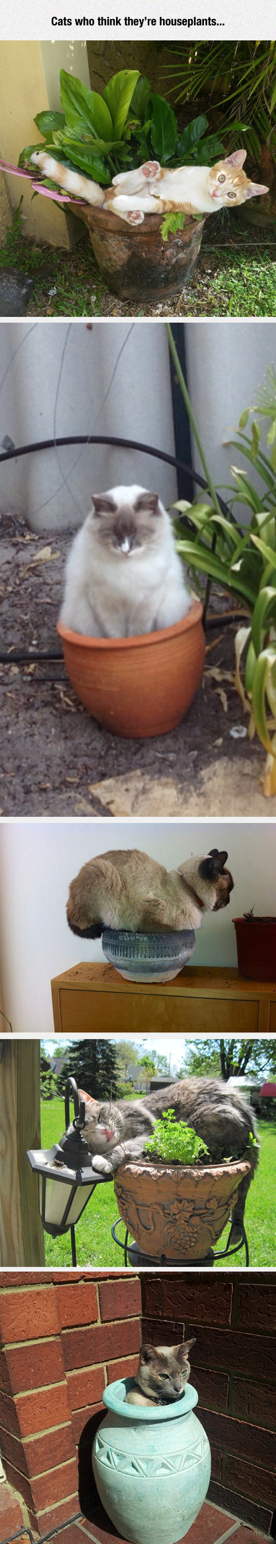 funny-cat-pot-plant-sitting