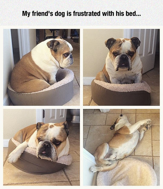 funny-dog-bed-uncomfortable-frustrated