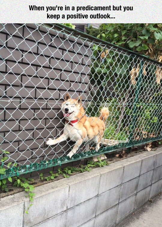funny-dog-house-wire-fence