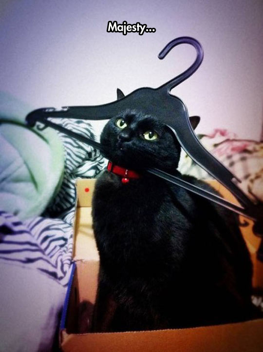 funny-hanger-cat-head-stuck
