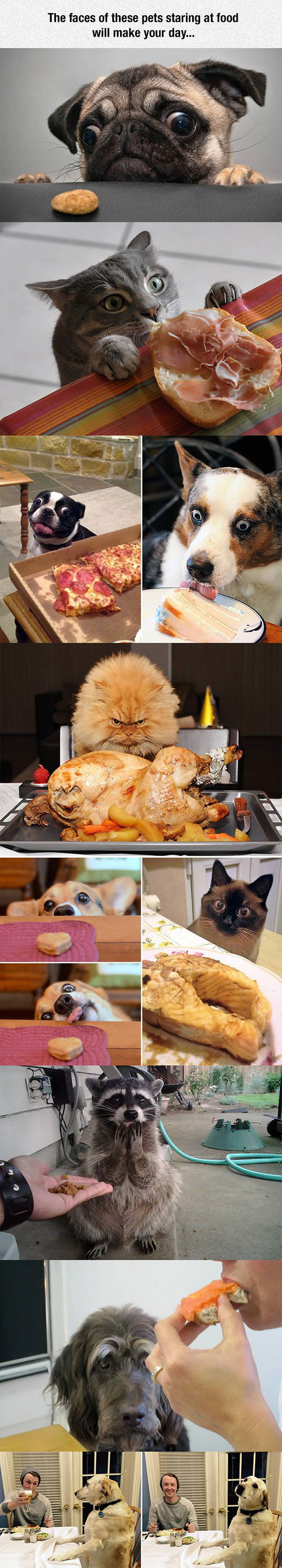 funny-pets-cat-dog-looking-food