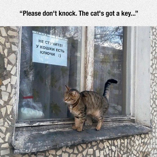 funny-windows-sign-cat-key