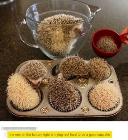 hedgehog-cupcakes-comment-cute