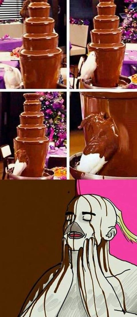 parrot-fontain-meme-chocolate