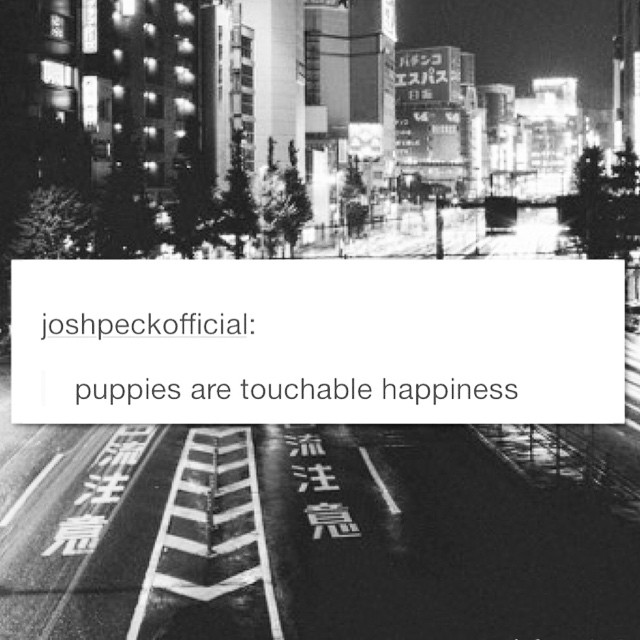 puppies-happiness-cute