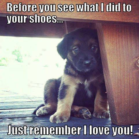 puppy-shoes-love-busted