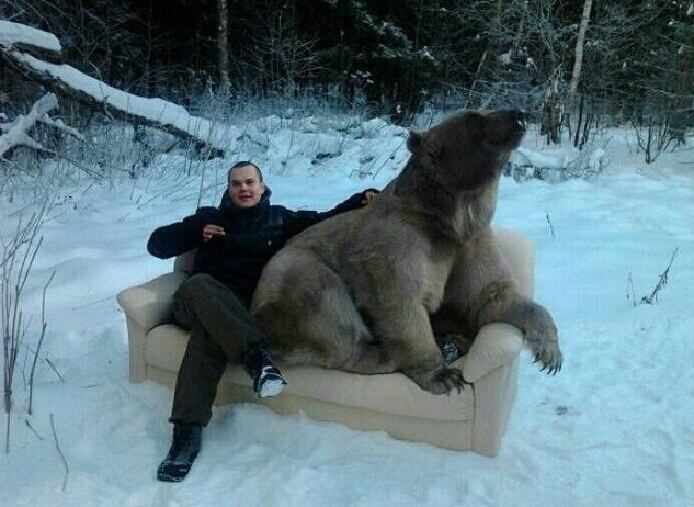 russia-bear-couch-snow