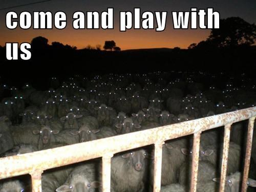 sheeps-creepy-eyes-play