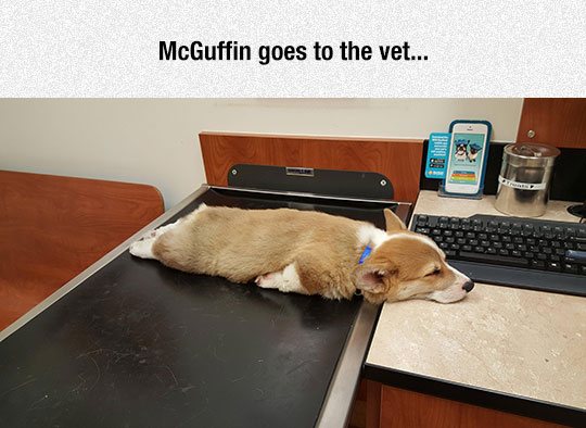 cute-lazy-dog-vet-bed