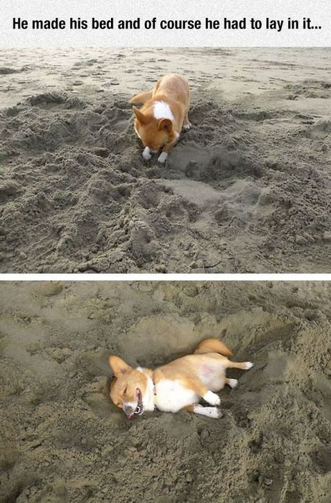 dog-bed-happy-beach