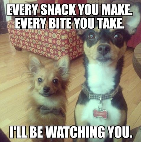 dogs-food-snack-stare