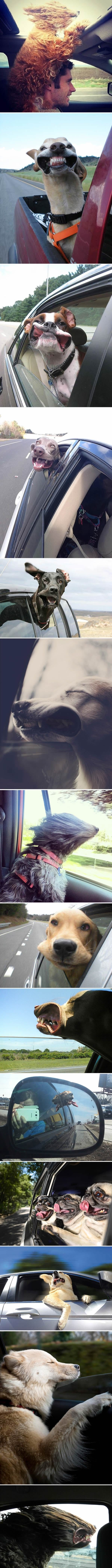 dogs-rides-compilation-wind