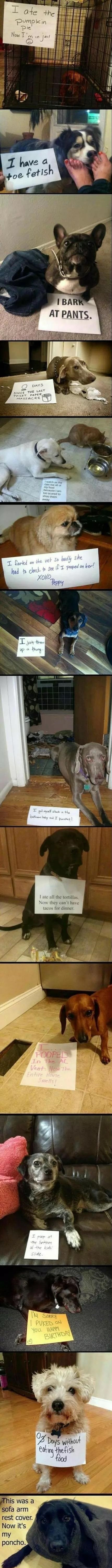 dogs-shaming-compilation