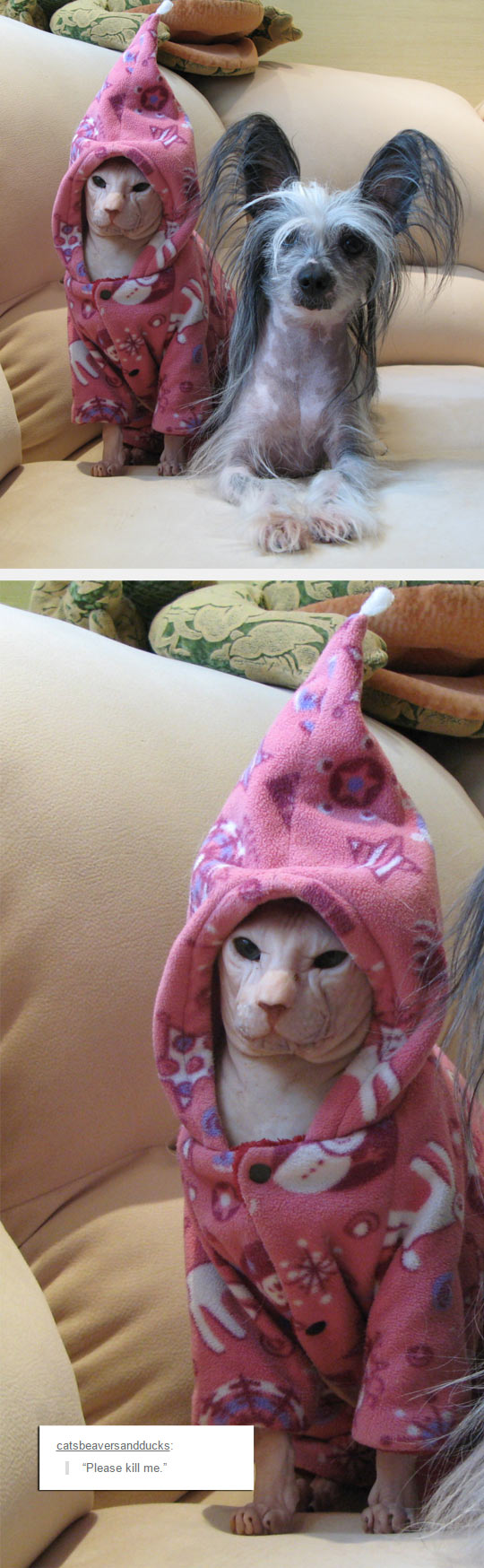 funny-Egyptian-cat-dog-hoodie