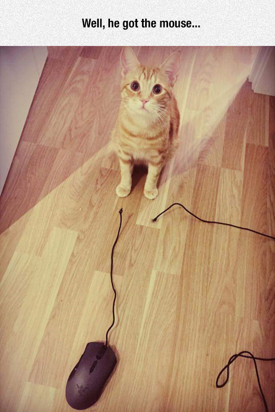 funny-cat-broken-mouse-cable