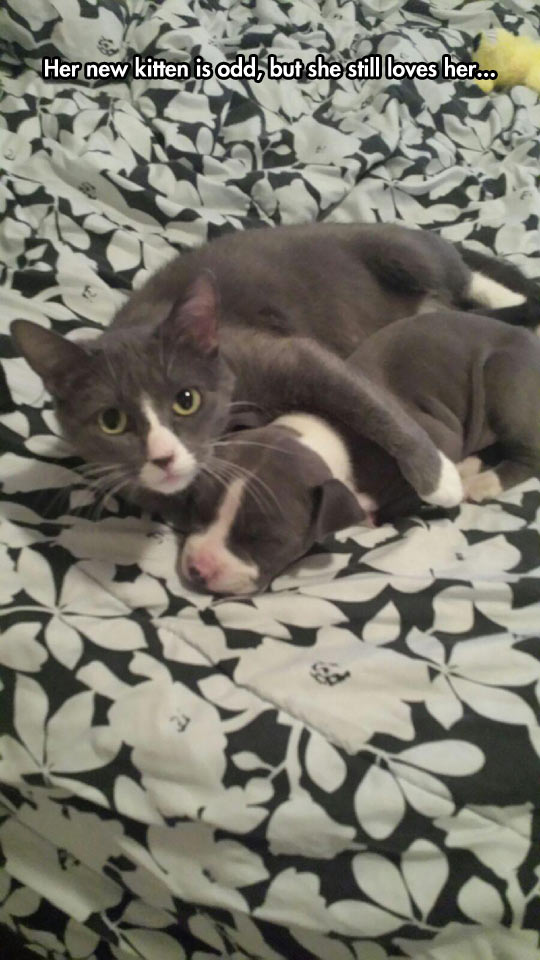funny-cat-dog-pets-matching-color