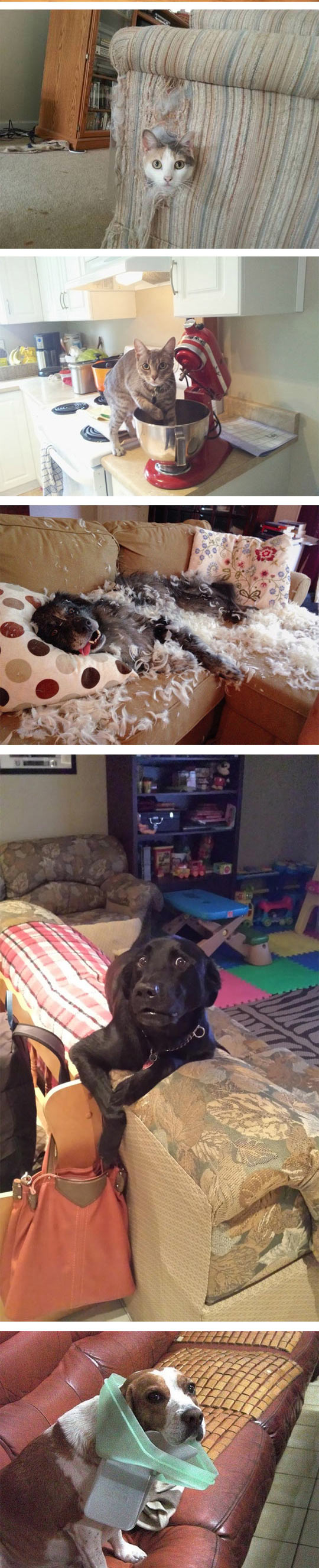 funny-cat-toy-awkward-moment-collections-dogs