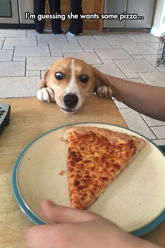 funny-dog-face-pizza-slice