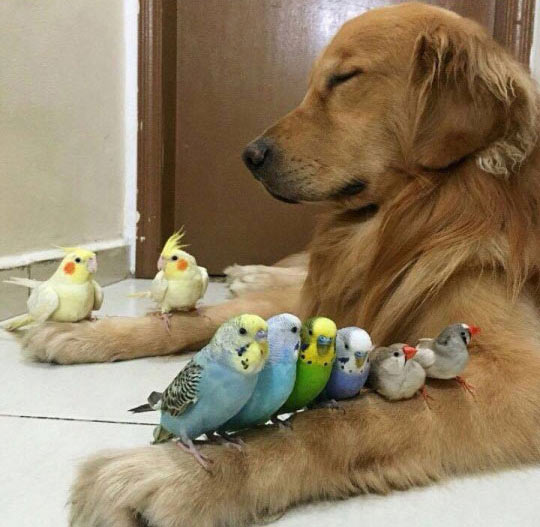 funny-dog-sleeping-birds-arms-paws