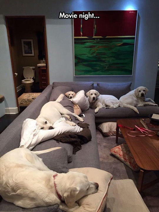 funny-dogs-couch-movie-night
