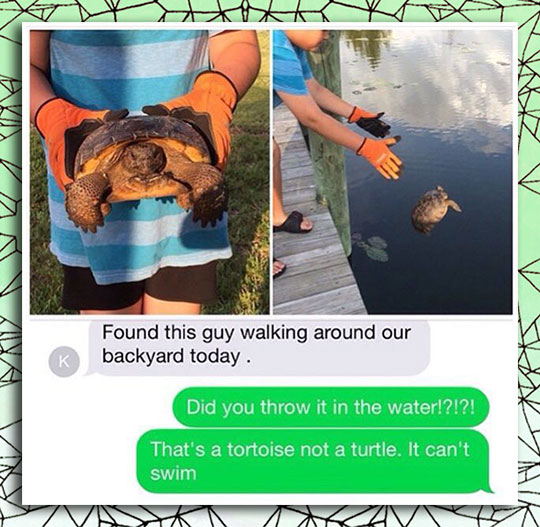 funny-turtle-tortoise-rescue-mistake