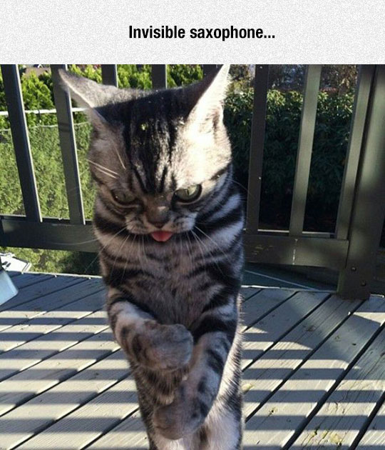 funny-ugly-cat-playing-invisible-saxophone