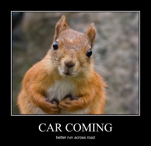 http://wanna-joke.com/wp-content/uploads/2015/06/squirrel-road-car.jpg