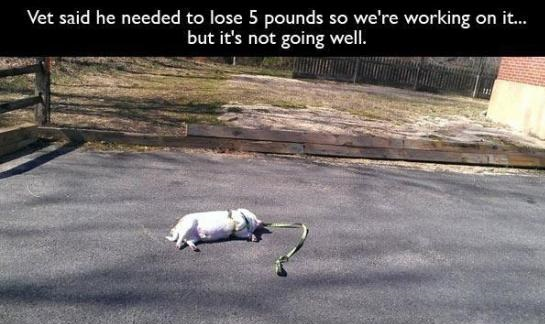 vet-dog-weight-loss