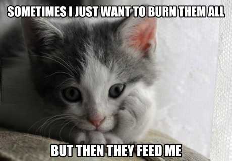 cat-angry-food-humans