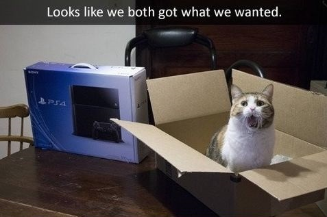 cat-box-ps4