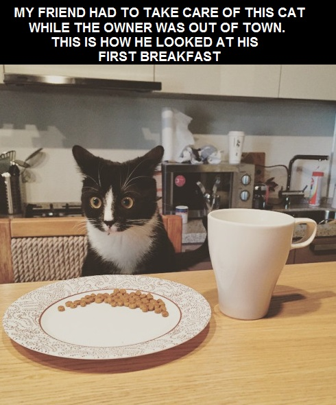 cat-first-breakfast-shocked