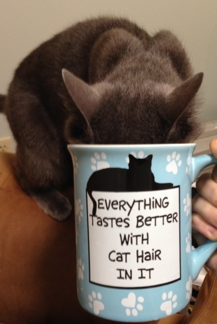 cat-hair-cup-drink