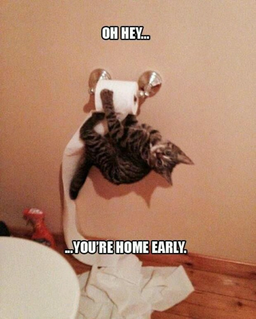 cat-toilet-paper-home-early