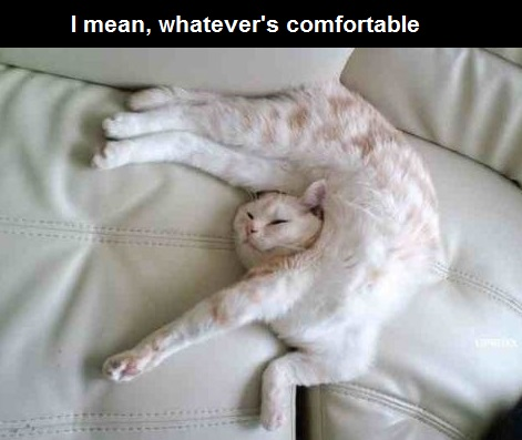 comfortable-cat-lieing