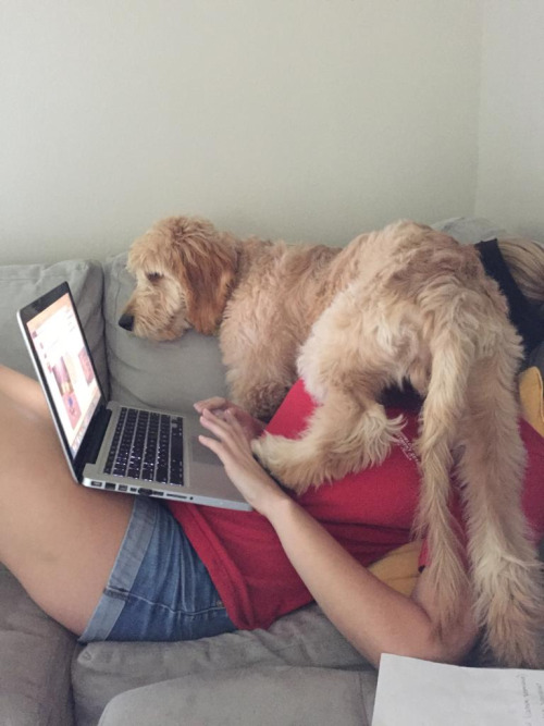 dog-annoying-laptop