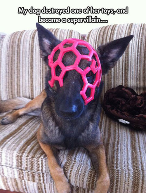 dog-supervillain-mask-toys